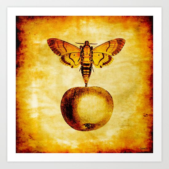 The butterfly and the golden apple Art Print