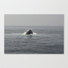 Whale Eating Canvas Print