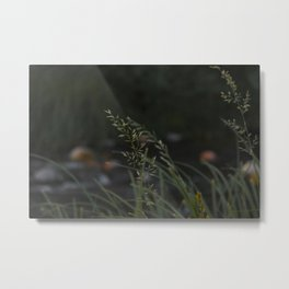 Oak Creek Grass - Sedona, Arizona, USA Metal Print