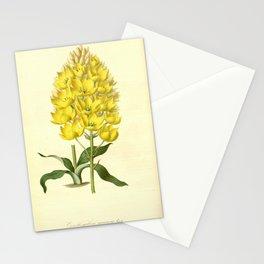 Flower ornithogalum aureum6 Stationery Cards