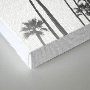 Black and White California Palms Canvas Print