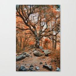 Old Oak at Autumn Canvas Print