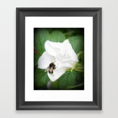 Hedge Rose with Busy Bee Framed Art Print