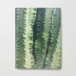 Green Cacti in the Palm Desert Sun Metal Print