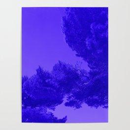 Blue Summer Pines Poster