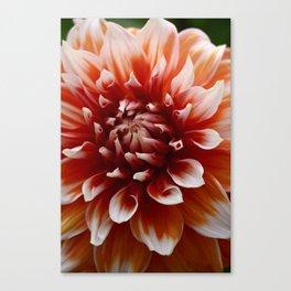 Cognac-Colored Dahlia Canvas Print