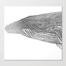 Grey Humpback whale portrait Canvas Print