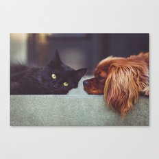 CAT - DOG - LYING - DOWN - ANIMALS - FRIENDS - PHOTOGRAPHY Canvas Print