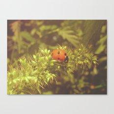 Ladybug and summer Canvas Print