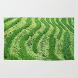 Longji Rice Terraces Rug