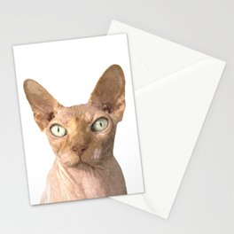 Sphynx cat portrait Stationery Cards