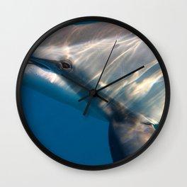 Dolphin's Gaze Wall Clock