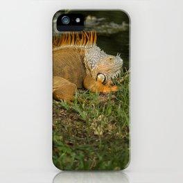 Iguana in the Sun iPhone Case