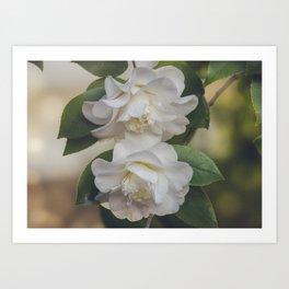 Romantic White Vintage Flowers, Nature Prints, Flower Photography Art Print