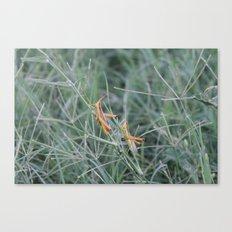 Hoppers Canvas Print