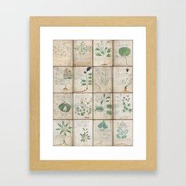 The Voynich Manuscript Quire 1 - Natural Framed Art Print