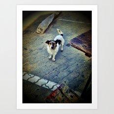 Homeless dog Art Print