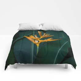 Orchids yellow Comforters