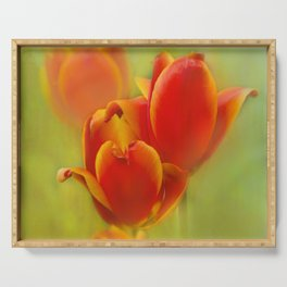 Orange Tulips Serving Tray
