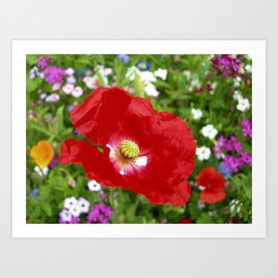red poppy XII Art Print