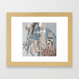 Peregrine Falcon and Kestrels Framed Art Print