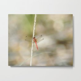 """Dragonfly #4"" by Murray Bolesta Metal Print"