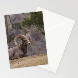 Leader Stationery Cards