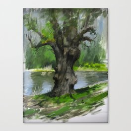An old willow Canvas Print