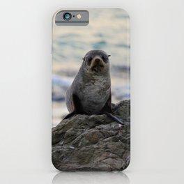 Seal Pair, Kaikoura iPhone Case
