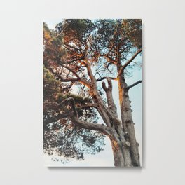 Trees of Exmouth 1 Metal Print
