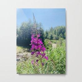 Willowherb and Sunshine Metal Print