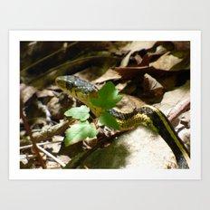 garter snake 2016 Art Print