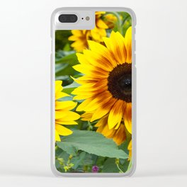 Bees resting on sunflower in a garden Clear iPhone Case