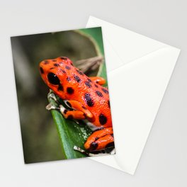 Red Frog Stationery Cards