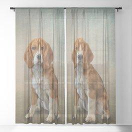 Drawing Dog Beagle Sheer Curtain