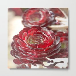 Red Sucullent Plant Metal Print