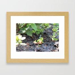 Sleeping Chespin Framed Art Print