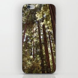 Redwood Forest XII iPhone Skin