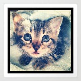 The Kitten Art Print