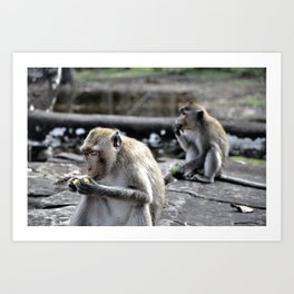 Feasting Monkeys Art Print