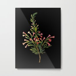 Erica Longiflora by Mary Delany Paper Collage Floral Flower Botanical Mosaic Vintage Scientific Plant Anatomy Metal Print