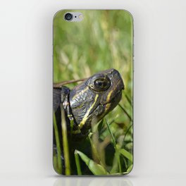 Painted Turtle iPhone Skin