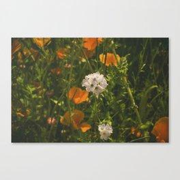 California Poppies 010 Canvas Print