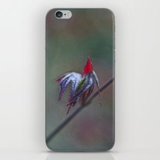 Ready for take off iPhone & iPod Skin
