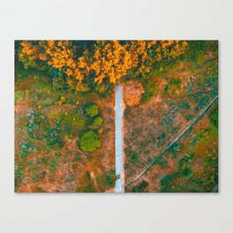 beautiful nature scene in a park - picture taken by a drone Canvas Print