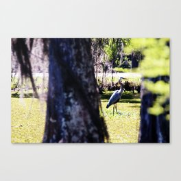 Stalking the Great Blue Heron Canvas Print
