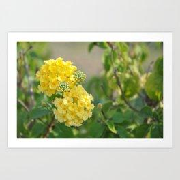 Yellow Mellow Flowers Fine Art Photography Art Print
