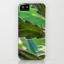 Guardian of the plants iPhone Case