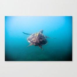 Turtle gliding underwater Canvas Print