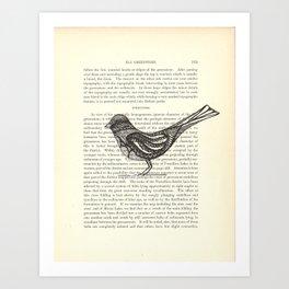 Perched Art Print
